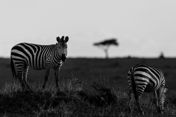 prints webshop fine art wildlife the wild site 25